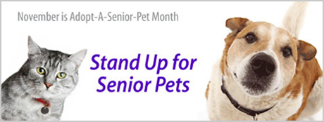 """Adopt a Senior Month"" Shout Out"